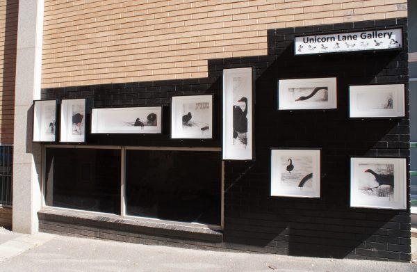 Bird Boxes exhibition in Unicorn Lane Gallery, Ballarat